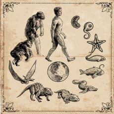 Uzun Süre Kafası Rahat Takılan İnsanoğlunun Son 12 Bin Yıldaki Evrimsel Atağının Özeti