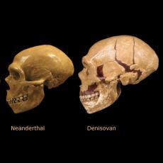 Neandertaller ile Birlikte Modern İnsanın Yakın Akrabası: Denisovan