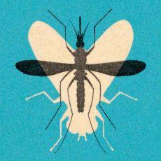 Doğal Malzemelerle Evde Yapabileceğiniz Etkili Bir Sivrisinek Tuzağı