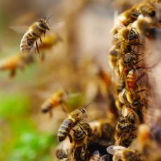 Arıların Sıfır Kavramını Ciddi Ciddi Anlayabilen İlk Omurgasız Canlılar Olması