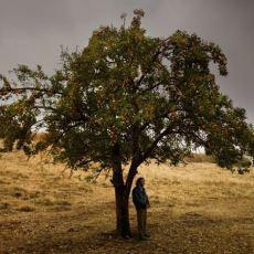 Bir Zamanlar Anadolu'da Filminin Dante'nin Cehennem'i Üzerinden Alt Metin Açıklaması