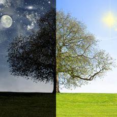 Birbirine Zıt Olan Şeylerin Aslında Mükemmel Bir Uyum İçinde Olduğunu Gösteren Detaylar