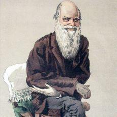 Darwin'in Evrim Görüşlerini Mendel'in Kalıtım Kuramıyla Birleştiren Teori: Neo Darwinizm