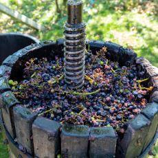 En Basit ve Masrafsız Yöntemiyle Evde Şarap Yapma Rehberi
