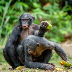 Hayvanların Ağızları Açık Bırakan İlginç Çiftleşme Ritüelleri