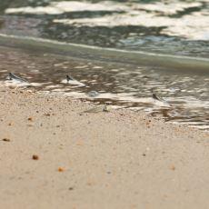 Yaşadığı Su Buharlaştığında Kendini Toprağın Altına Gömüp Yağmuru Bekleyen Balık: Lungfish