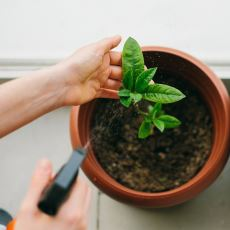 Evde Bitki Bakımı Nasıl Yapılır?