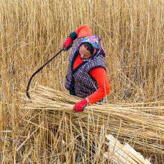 Tarımda Ülke Olarak Dışa Bağımlı Hale Geldiğimizi Kanıtlayan Çarpıcı Bir Veri Analizi