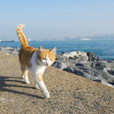 Avrupa Ülkelerinin Sokaklarında Neden Hiç Kedi Göremiyoruz?