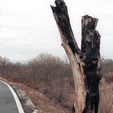 Basit Bir Ağaç Budamasının ABD, Kuzey ve Güney Kore Arası Krize Dönüştüğü Kavak Ağacı Olayı