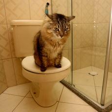 Kediler Evdeyken Kumları Dışında Bir Yere Neden İşeyebilir?
