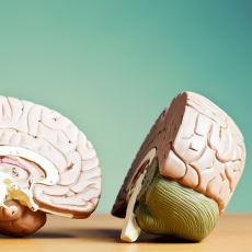 Sağ ve Sol Beyin Arasında Gerçekten de Söylendiği Gibi Bir Fark Var mı?