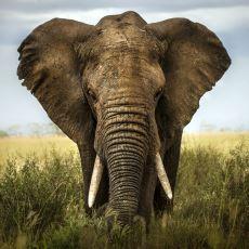 Bazı Hayvanların Şaşırtıcı Derecede Gelişmiş Duyma Kabiliyetine Sahip Olması