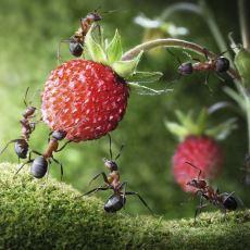 Karıncaları Ölüme Kadar Götürebilen Garip Olay: Ölüm Çemberi