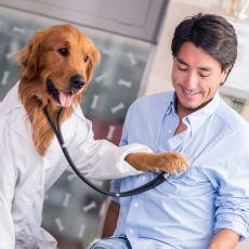 Birçok Köpek Türünün Bazı Kanser Türlerini Koklayarak Tespit Edebilmesi