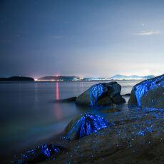 Deniz Kıyılarında Görsel Şölen Yaşatan Biyoluminesans Nedir, Nasıl Oluşur?