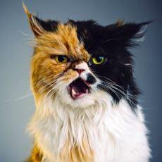 Kediler Hakkında Aşırı İlginç Detaylar