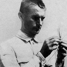 Stalin'in Desteğini Alarak Sovyetler Birliği'nde Bilime Ciddi Engeller Koyan Biyolog: Trofim Lysenko