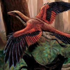 Yaklaşık 150 Milyon Yıl Önce Yaşamış Bilinen İlk Kuş Türü: Arkeopteriks