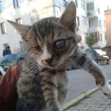 Sokaktaki Kediye Yardım Eli Uzatan Sözlük Yazarından Duygulandıran Hikaye: Sebahattin
