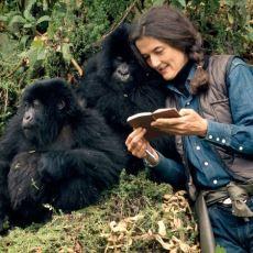 Ruanda'nın Dağ Ormanlarında Yıllarca Gorillerle Çalışma Yapmak İçin Yaşamış Bilim Kadını Dian Fossey'in Hikayesi