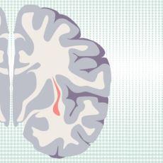 Bilinç ile İlgili Olduğu Düşünülen Gizemli Beyin Bölümü: Claustrum