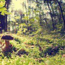 Doğada Vakit Geçirmeyi Sevenler İçin Bitki ve Meyvelerin Zehirli Olup Olmadığını Anlama Yöntemleri