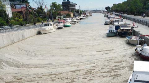 Marmara Denizi'ndeki Büyük Tehlike: Deniz Salyası (Müsilaj)