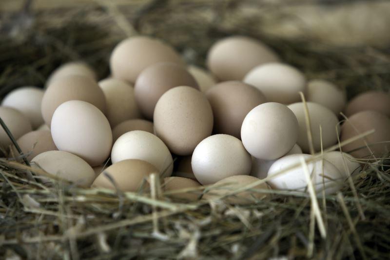Tavuk yumurtası ne kadar ağırlık veriyor ve nasıl belirliyor