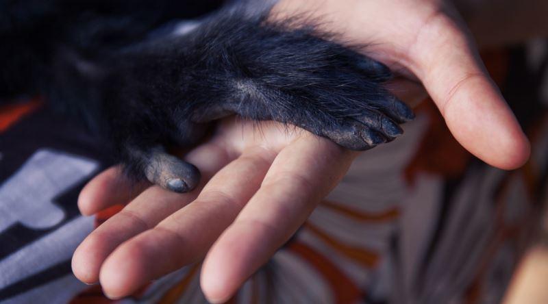 el parmaklarimiz neden farkli boydadir