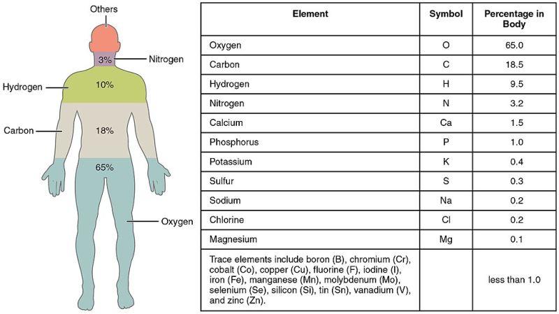 oksigen yox olarsa ne olar