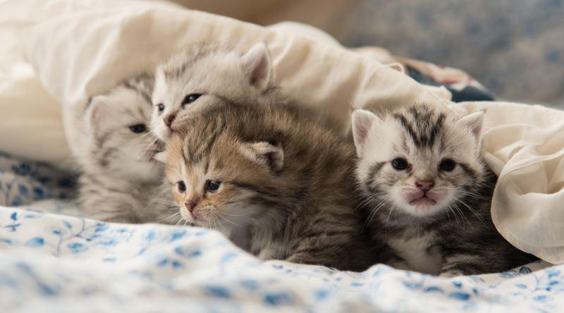 Yavru Kedi Bakımına Dair Bilinmesi Gereken En önemli şeyler Ekşi