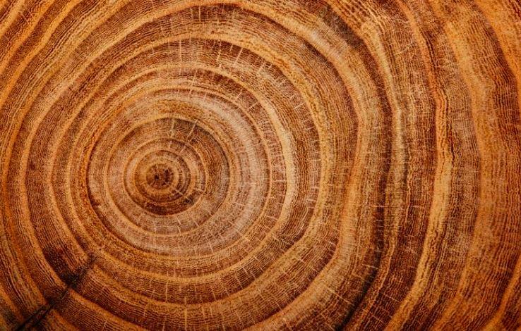 Ağaç Yaşı Nasıl Hesaplanır Ekşi şeyler
